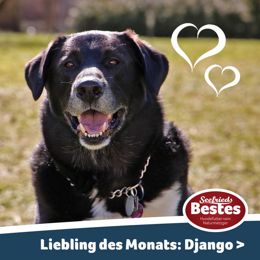 Django ist der Liebling des Monats